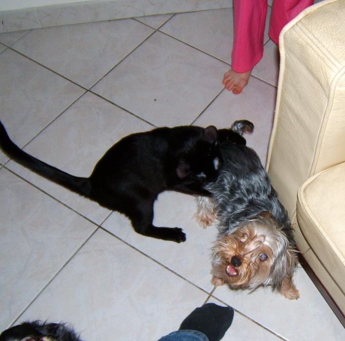 Lilas, 8 mois, et ses 5 chatons née le 29/05/2010 Dscf6613