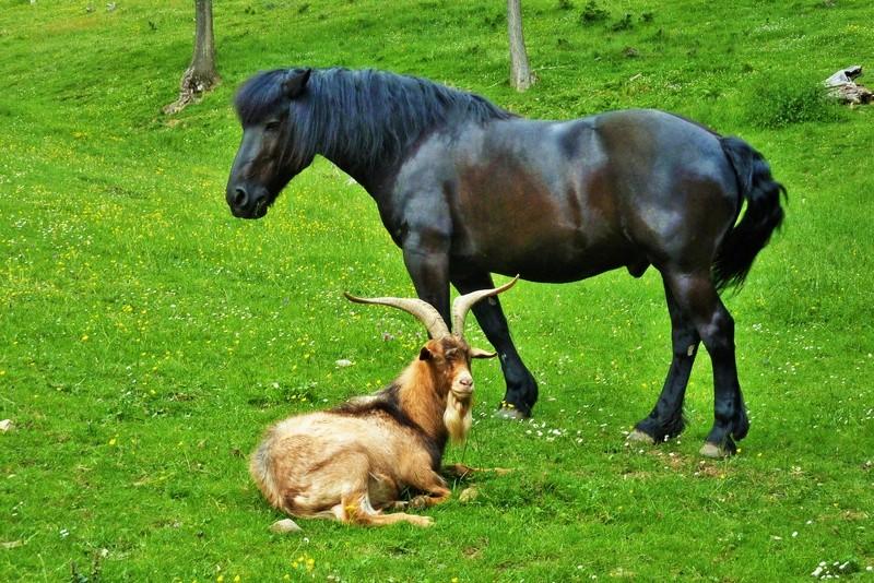 """Concours photos """"les compagnons de vos chevaux"""" gagnant Joël 10_06_10"""
