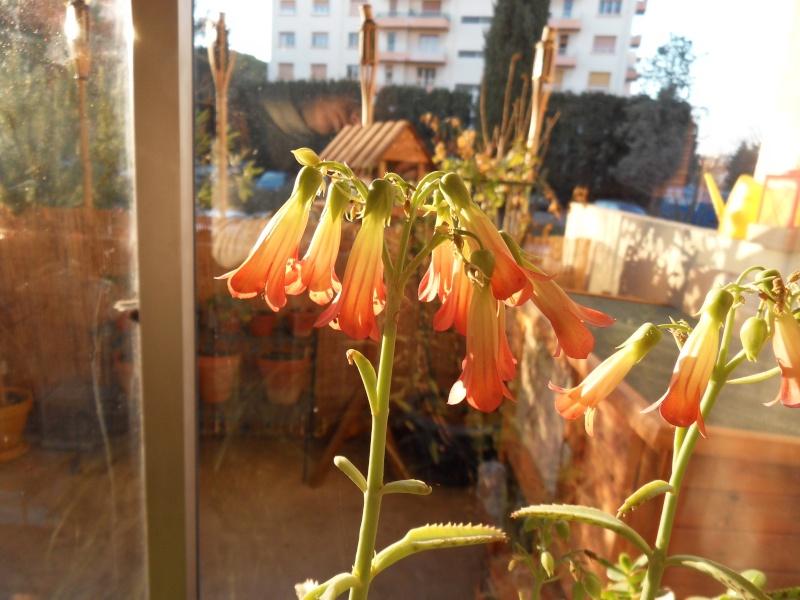 Quelle est cette plante ??? Sdc10211