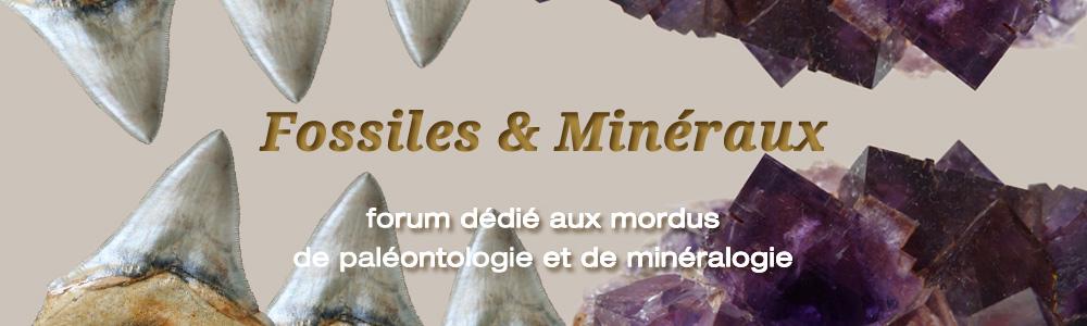 Fossiles et Mineraux