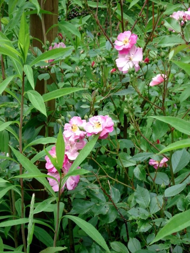 le jardin de Giroflée 2 - Page 34 511_3315