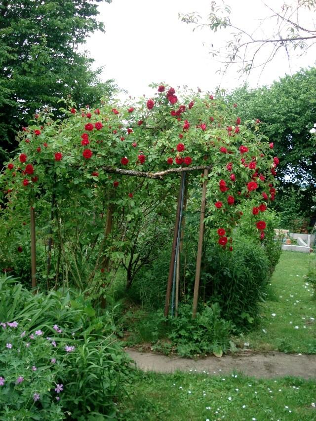 le jardin de Giroflée 2 - Page 34 511_3325