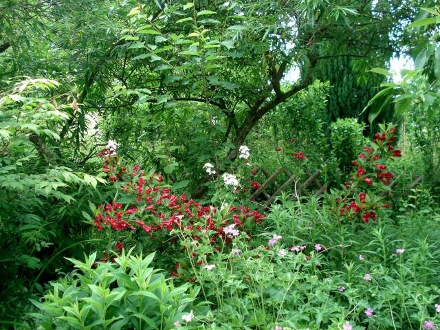 le jardin de Giroflée 2 - Page 34 511_3326