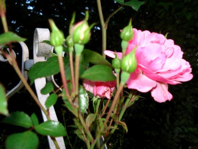 le jardin de Giroflée 2 - Page 35 511_3353