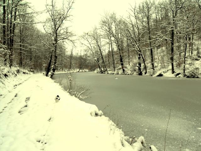 Concours photo du mois de janvier Neige_10