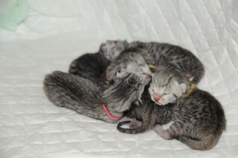 Les chatons de Vendémiaire. Dsc_3412