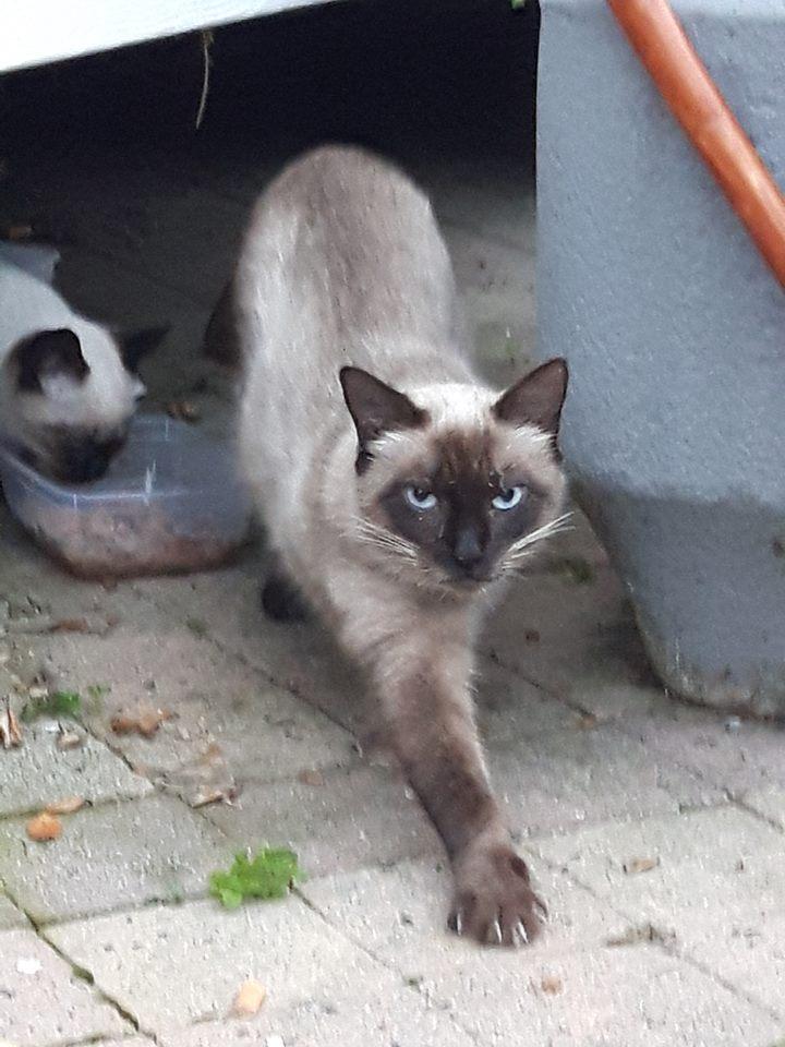 Recherche solution pour famille de chats siamoisés à la rue (Biarritz) - Page 2 15086310