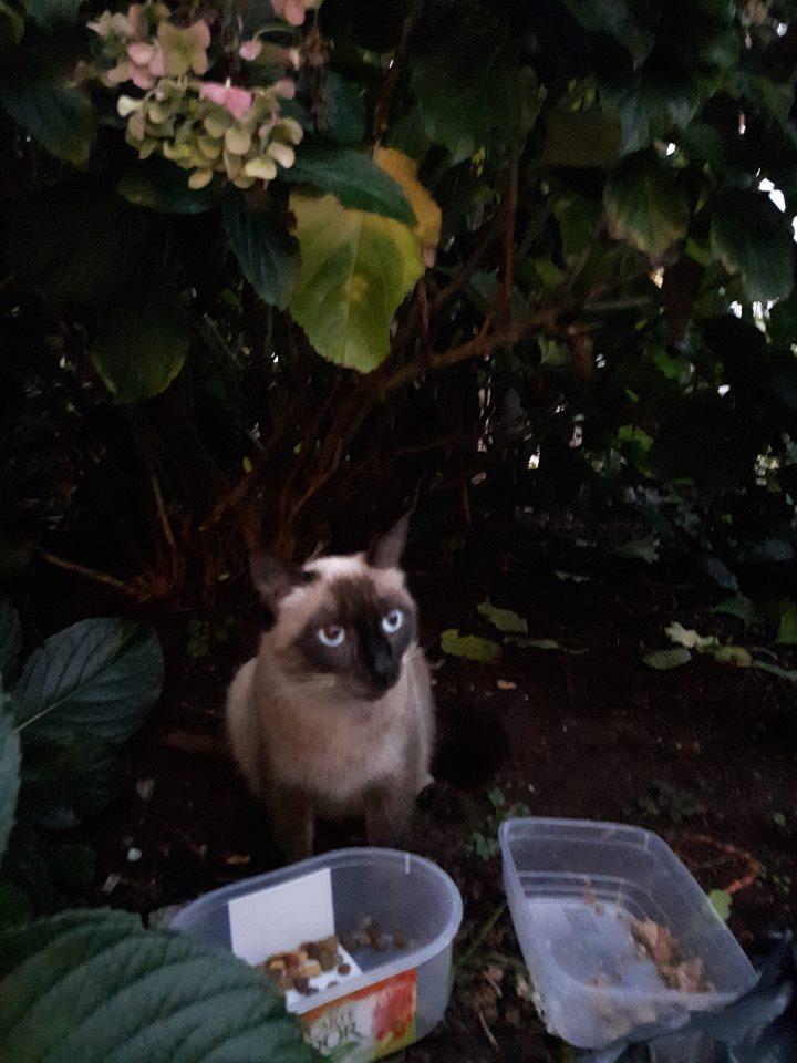 Recherche solution pour famille de chats siamoisés à la rue (Biarritz) - Page 2 15134410