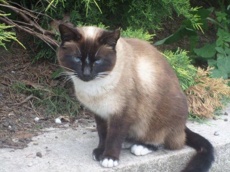 2 chats à la rue dans le Tarn(81) M2_sia10