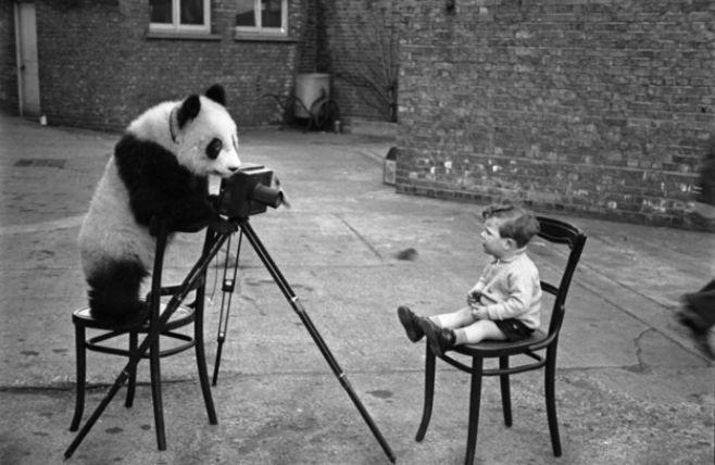 Images diverses - Page 6 Panda10