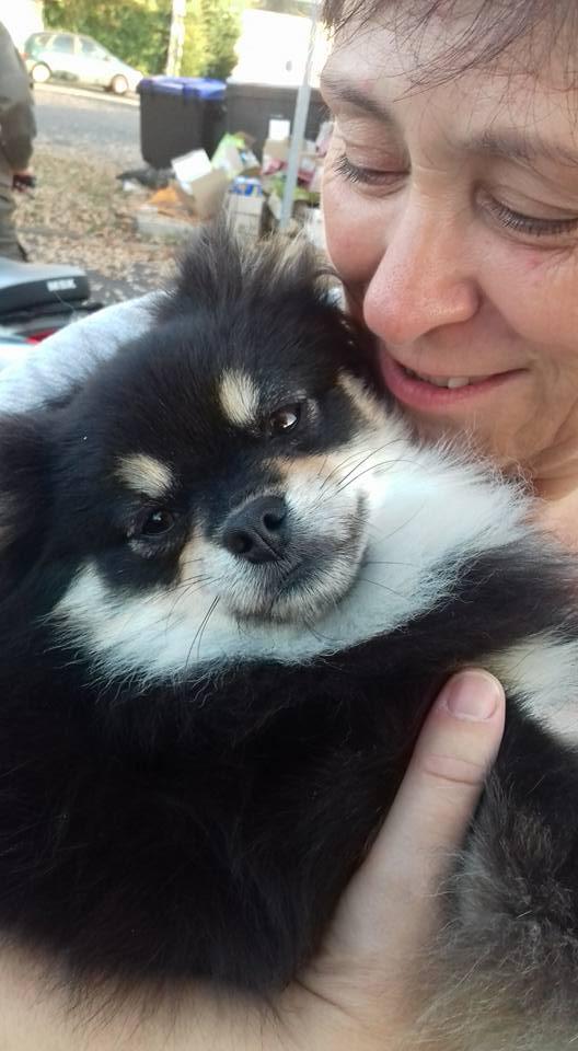 Lovely ,petite spitz naine née en 2015 à l'adoption Scooby France Adoptée  Lovely11