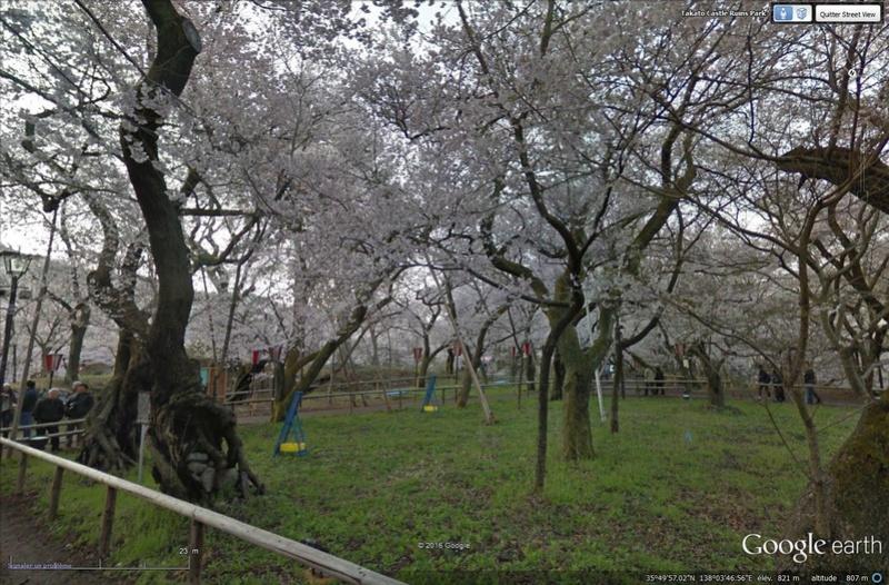 [Japon] - Les Sakuras 桜, les cerisiers symbole d'une nation Tsge_027