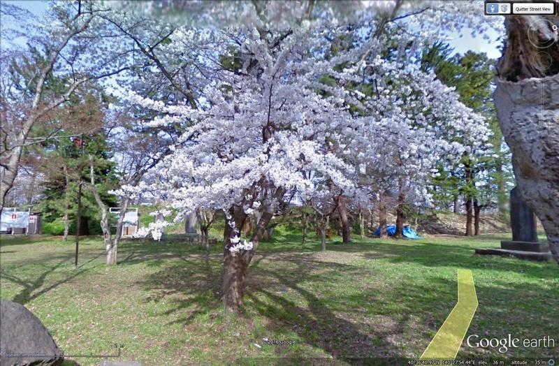 [Japon] - Les Sakuras 桜, les cerisiers symbole d'une nation Tsge_028