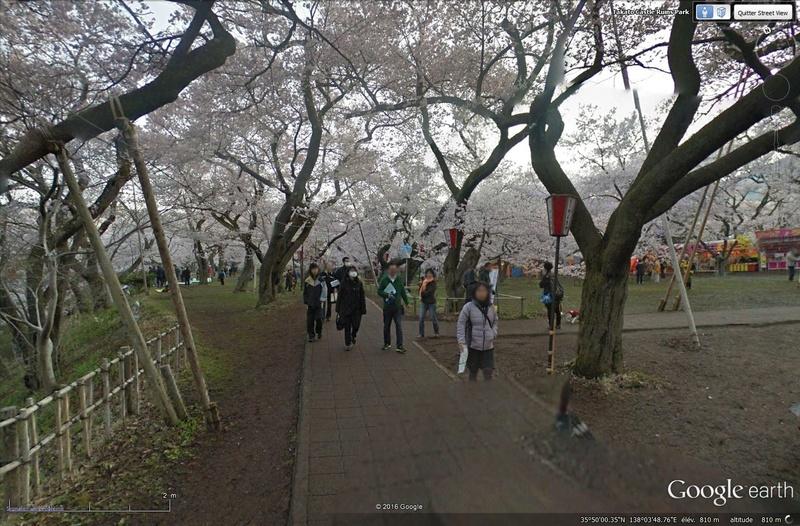 [Japon] - Les Sakuras 桜, les cerisiers symbole d'une nation Tsge_030