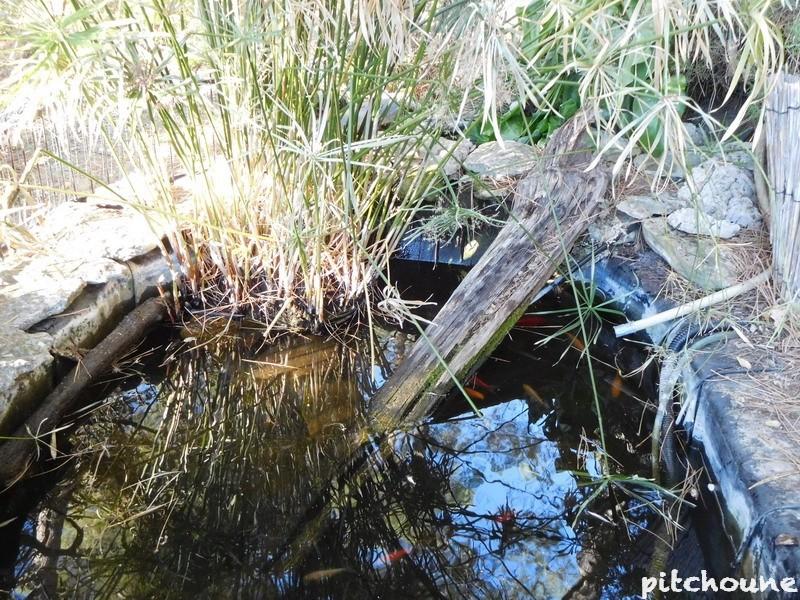 Accouplement dans l'eau glacée Dscn1511