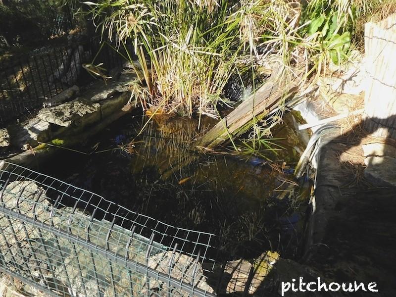 Accouplement dans l'eau glacée Dscn1514
