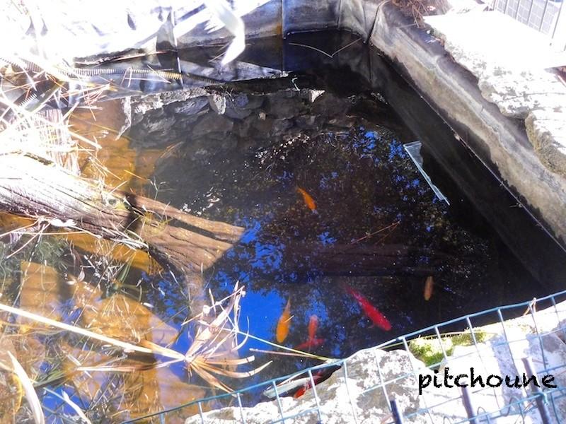 Accouplement dans l'eau glacée Dscn1516