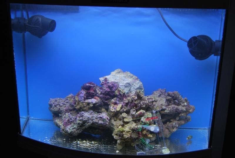 Débutant aquarium marin  - Page 2 Dsc_0114
