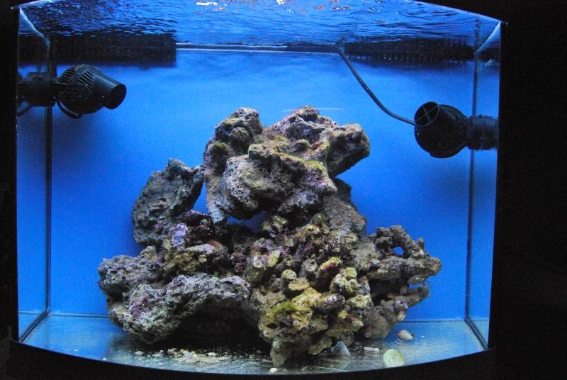 Débutant aquarium marin  - Page 2 Dsc_0116