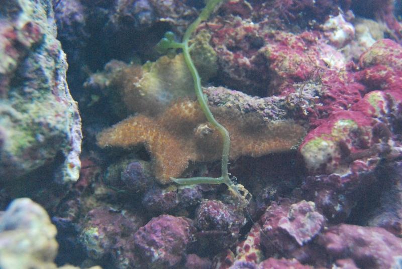 Débutant aquarium marin  - Page 2 Dsc_0117