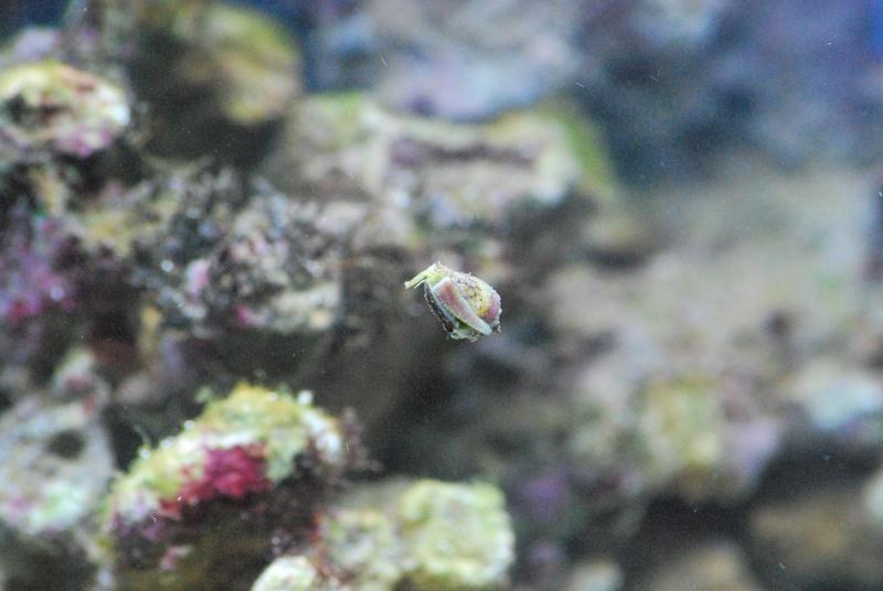 Débutant aquarium marin  - Page 2 Dsc_0118