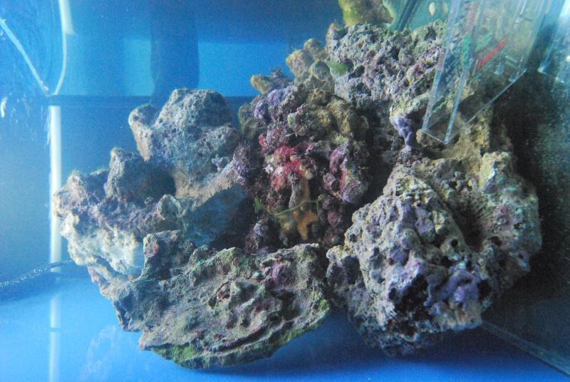 Débutant aquarium marin  - Page 2 Dsc_0119