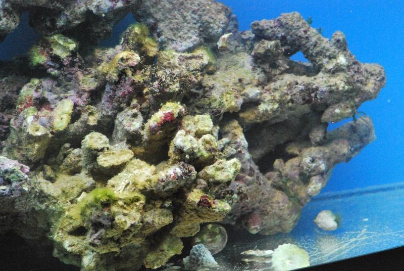 Débutant aquarium marin  - Page 2 Dsc_0120