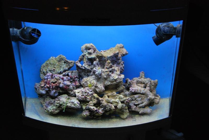"Mon  ReefPlus 105L ""djedje02"" Dsc_0214"