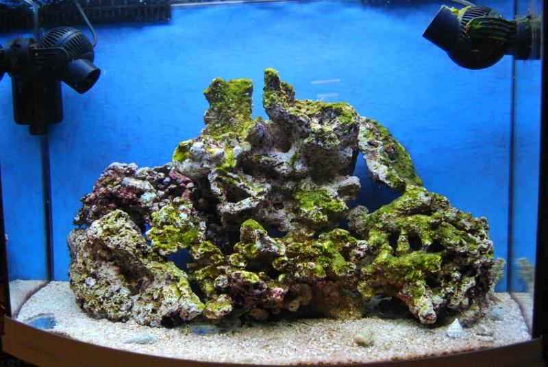 "Mon  ReefPlus 105L ""djedje02"" Dsc_0219"
