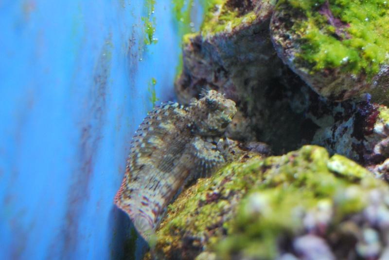 "Mon  ReefPlus 105L ""djedje02"" Dsc_0220"