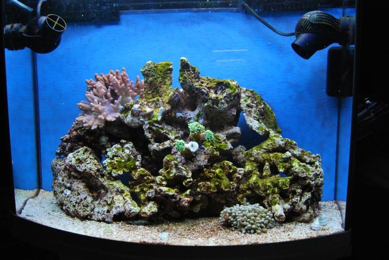 "Mon  ReefPlus 105L ""djedje02"" Dsc_0223"