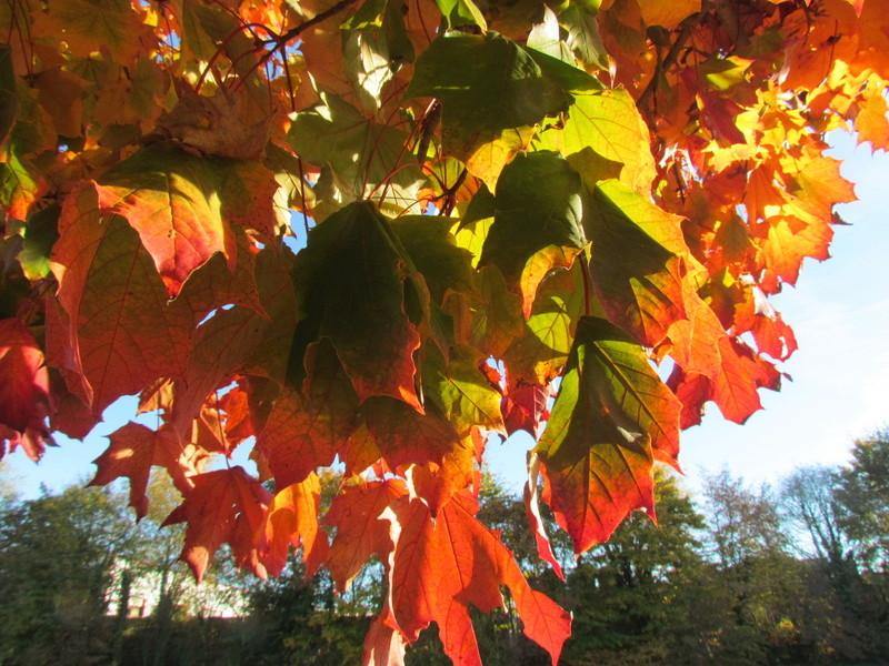 l'automne et ses couleurs  sont là Autonm14