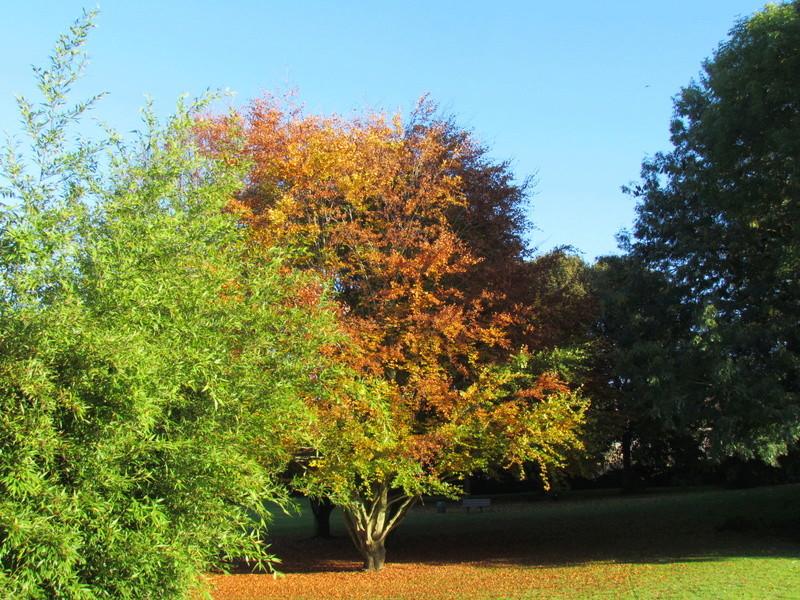 l'automne et ses couleurs  sont là Autonm16
