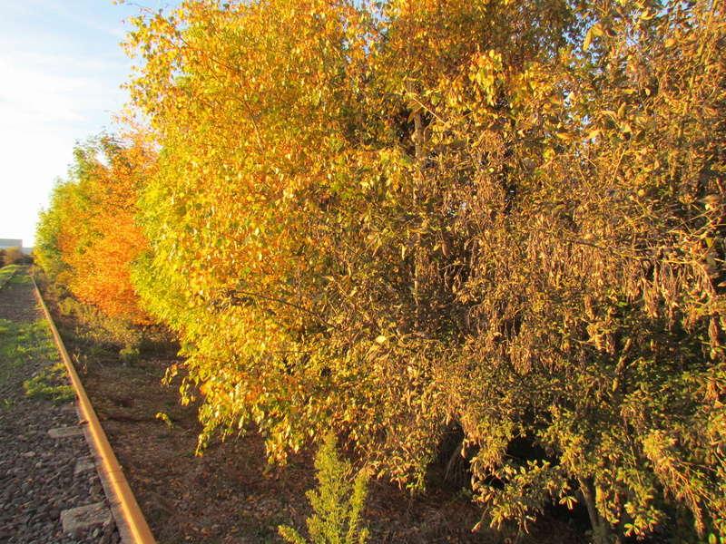 l'automne et ses couleurs  sont là Autonm17