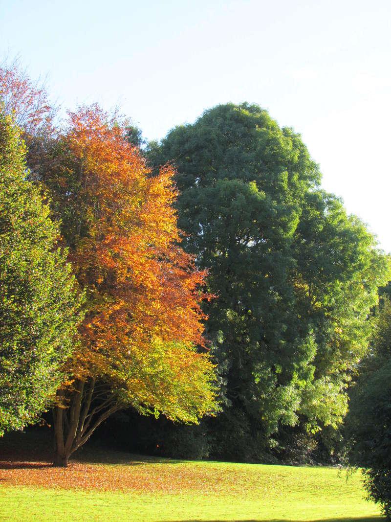 l'automne et ses couleurs  sont là Autonm24