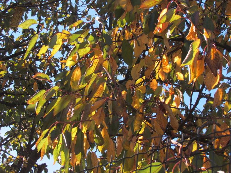 l'automne et ses couleurs  sont là Autonm26