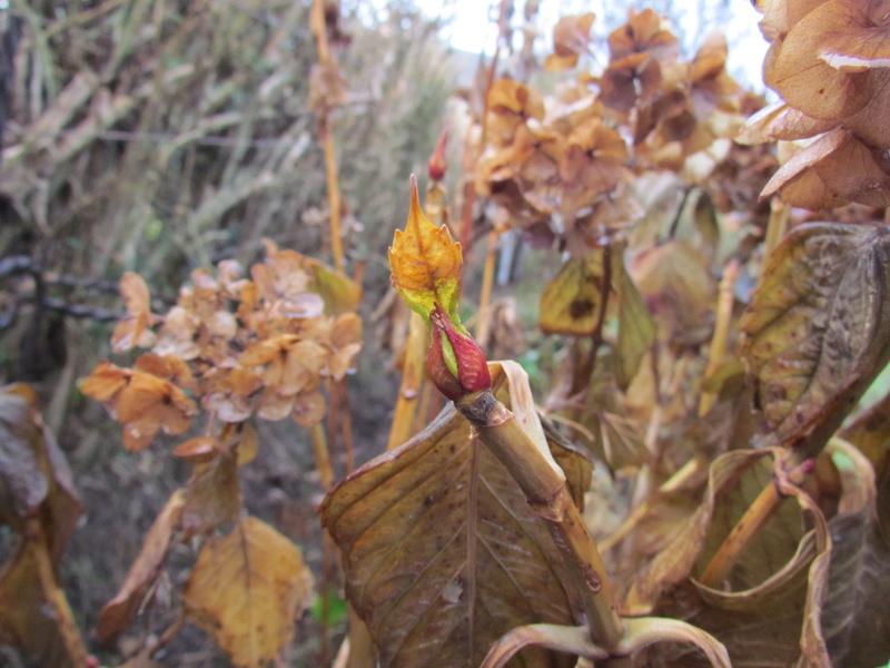 l'automne et ses couleurs  sont là Boaxc_10