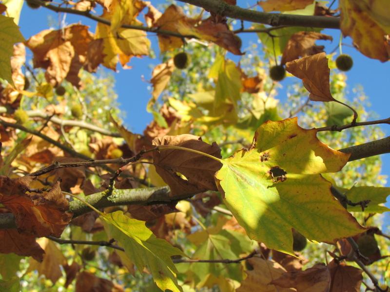 l'automne et ses couleurs  sont là Boix_510