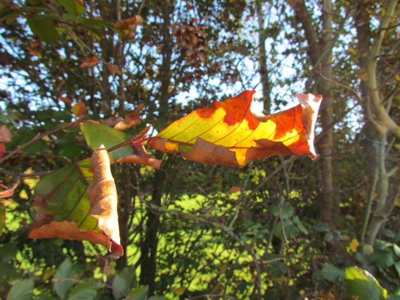 l'automne et ses couleurs  sont là Boix_710