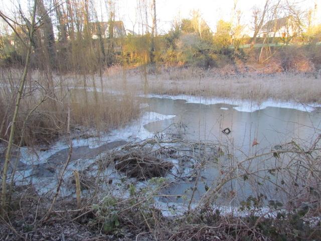 ils ont pollué, mon lac.......... - Page 5 Hivers21