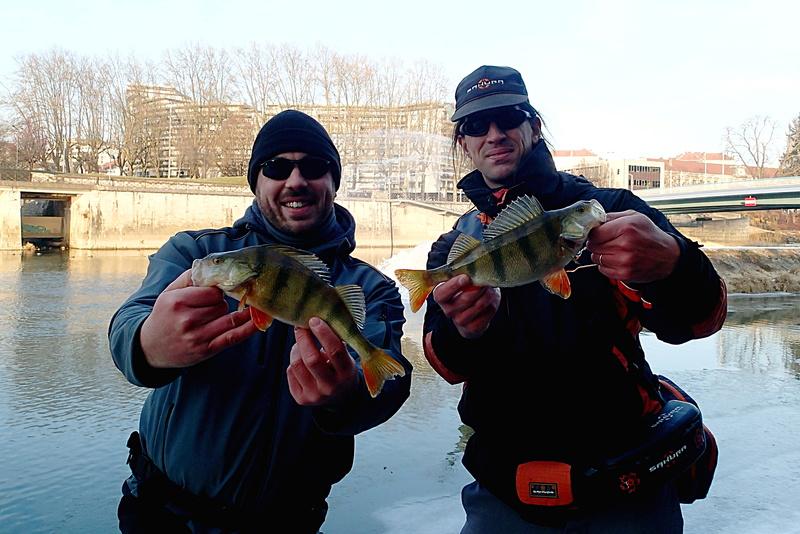 sortie pêche janvier  2perch10