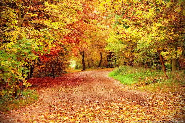 Rendez-vous d'automne Automn10