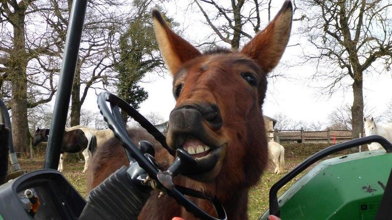FALBALA - ONC mule née en 2015 - adoptée en juillet 2016 par Thierry - Page 2 16299711