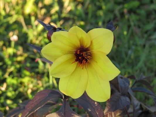 33 - La couleur jaune !!! 110