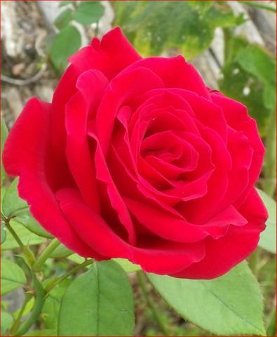 34 - La couleur rouge.........photos reçues !!! 25072013