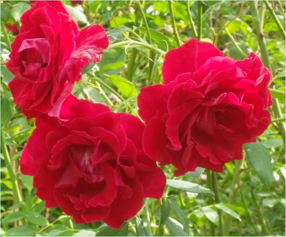'Red Parfum' !!! 27072012