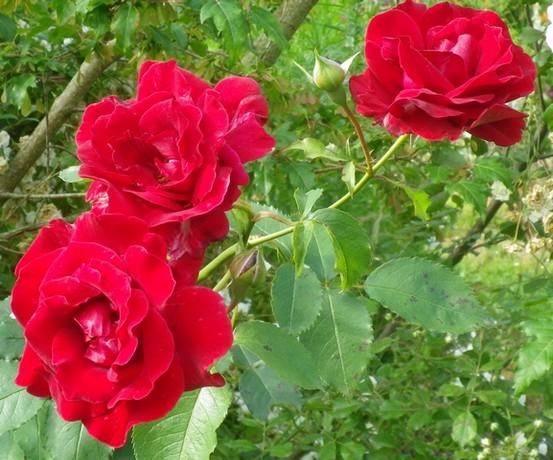 'Red Parfum' !!! 28062014