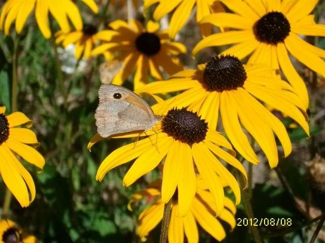 33 - La couleur jaune !!! Aout_010