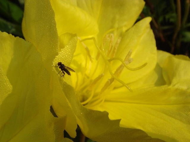 33 - La couleur jaune !!! Dsc00313
