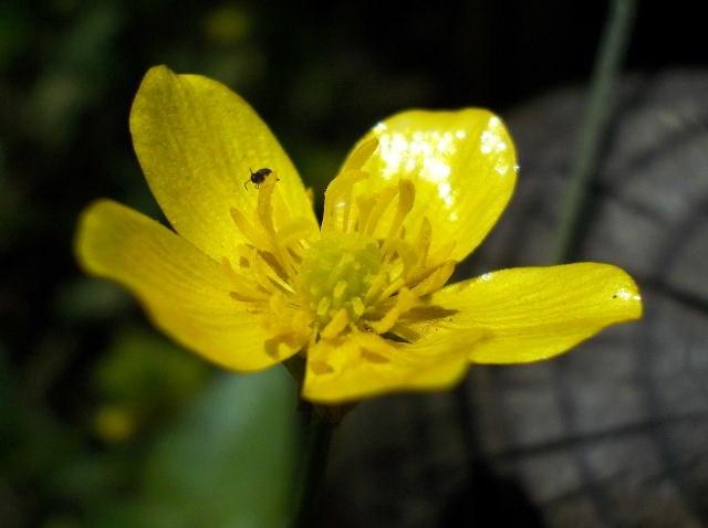 33 - La couleur jaune !!! Dscn8911